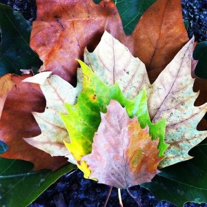 leaf it out bankstars