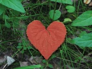 red-heart-shape-leaf-wallpaper